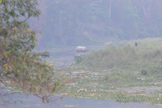 A rhino seen crossing the river - a first day sighting by our eagle eyed guide. The figure to the right is an uber-confident ranger